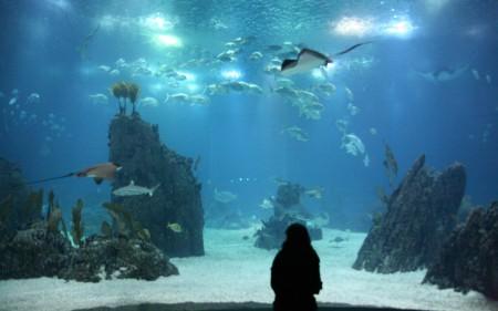 Aquarium_FelixAlbrecht