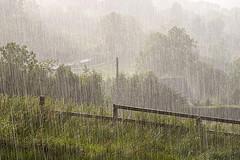 Heavy Rain Anna Jean Mayhew