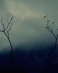 The Art of Losing, the Art of Holding: Karen Skolfield's <i>Frost in the LowAreas</i>