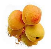 Anjali Mitter Duvas Apricot