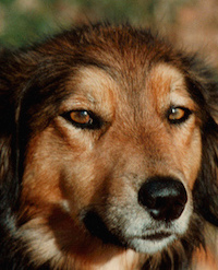 Very Like a Dog: David Wroblewski and <i>The Story of EdgarSawtelle</i>