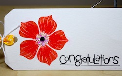 Bloomers at Large: Congratulations Are inOrder
