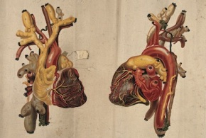 """The Heart Is a Pump"": An Excerpt from Paul Seward's <em>Patient Care</em>"